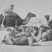 How did the introduction of camels affect travel and commerce in the ancient world?